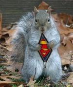 Super Ecureuil