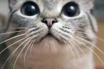 Dr. Cat