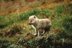 Wolf2407
