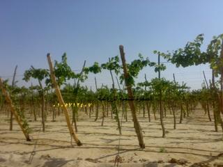 منتدى الصفوة للتنمية الزراعية - البوابة 76661010