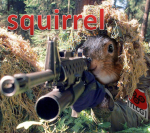 squirrelbruhn