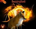 Burningfox6