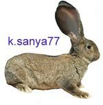 k.sanya77