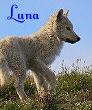 Lunawolf 007