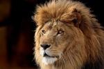 lionvalen