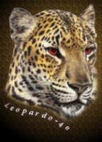 leopardo-40