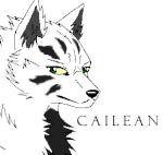 Cailean