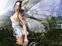 papillon882