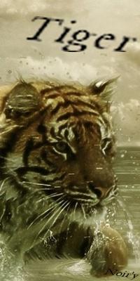 Sagesse du Tigre