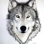 Wolf D´Sanctorum