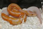 jp-terra-reptiles