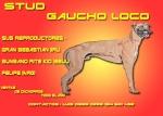 stud gaucho loco