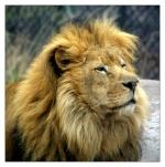 Sky_Lion