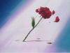 Sailor Moon Captures Rose10