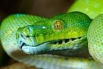 BAM Python