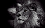 Lionheart0887