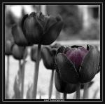 Guigui_La_Tulipe