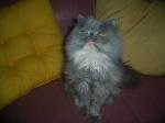 Nuxa,3 años