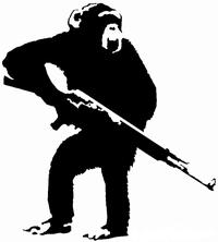 Macaque47