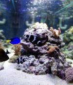 Présentation des aquariums marins 1422-86