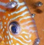 Vos poissons d'eau douce 1560-26