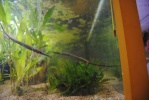 Présentation des aquariums marins 330-60