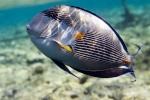 Présentation des aquariums marins 532-54