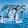 Présentation des aquariums Eau Douce 881-37
