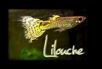 lilouche