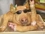 porcinette