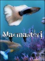 Macmasteri