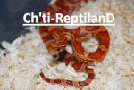 reptiles.62200