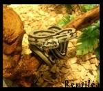 Reptiléa