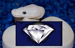 DIAMOND-MORPH