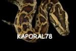kaporal78