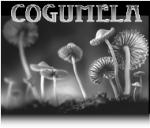 Cogumela
