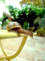 Paroxysme_