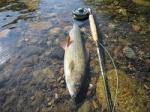 Pêche à la mouche 2903-1