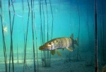 Pêche en mer 343-27