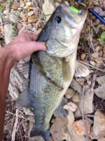 Discussions autour de la pêche 4491-53