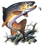 Cannes à pêche 5192-49