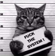 fuckdsystem