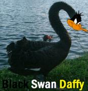 Black-Swan-Daffy