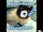 Evilmarmot