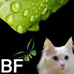 Bea_bolboreta_forest