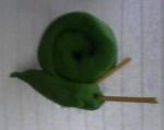 snail123
