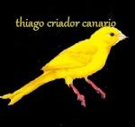 thiago criador canario