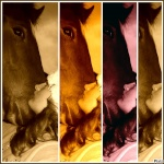july-horse-love