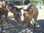 Horse-racing-05