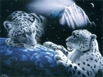 tigre23